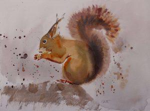 Aquarell Eichhörnchen reduziert, Tiere