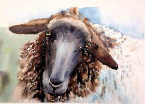 Aquarell Schaf, Tiere