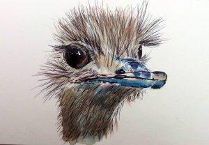Vogel Strauß in Aquarell - Kopf, Tiere