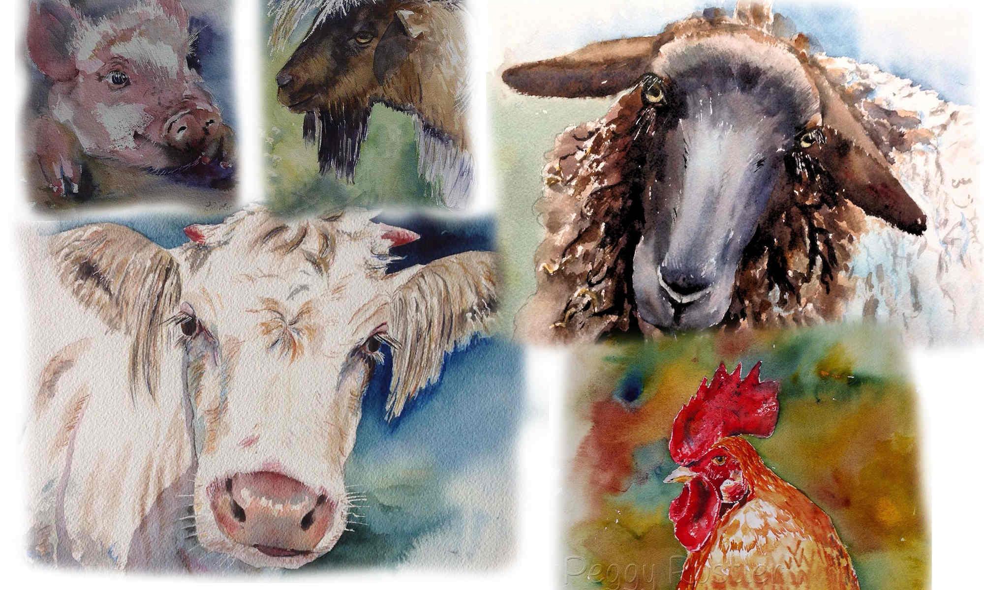 Aquarelle zu Schwein, Schaf, Ziege, Hahn und Kuh