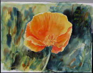 Aquarell orange Mohnblüte im Skizzenbuch von Stillman & Birn, Beta