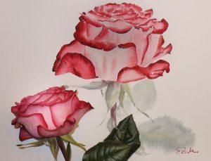 Rose in Aquarell mit echter Rose als Vorlage