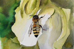 Aquarell Biene auf Blume - Leonardo rau von Hahnemühle