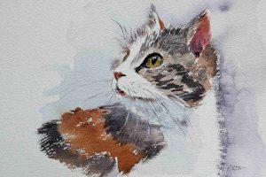 Aquarell Katze auf Leonardo rau von Hahnemühle