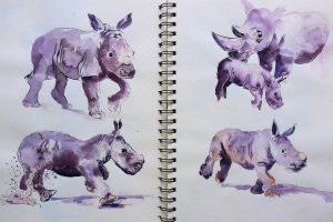 Nashornbabies als Aquarellskizzen in Stillman & Birn, Gamma