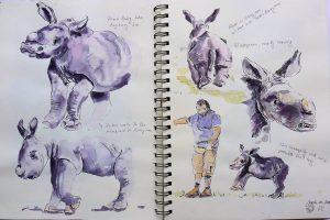 Aquarell-Skizzen von Nashornbaby Kibo aus dem Augsburger Zoo.