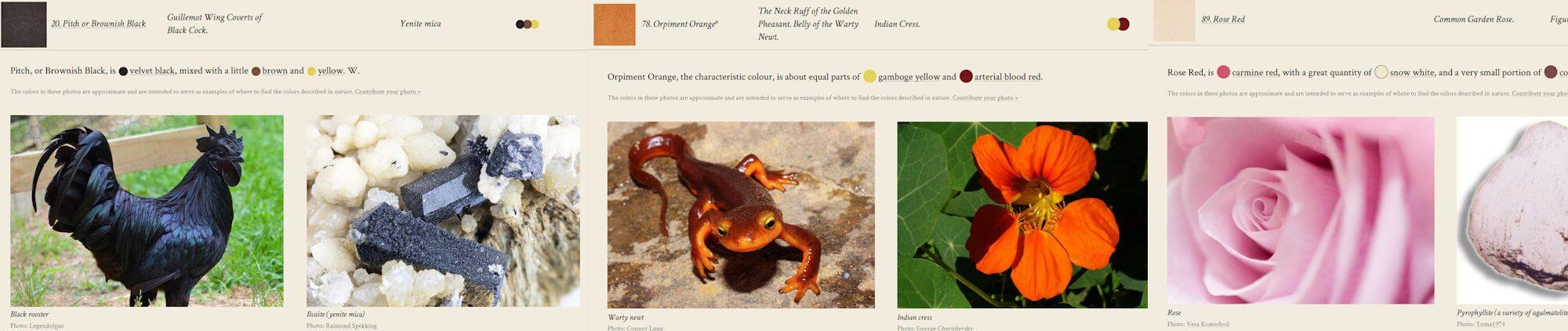 Verschiedene Farben aus Werner's Nomenklatur der Farben anhand von Beispielfotos