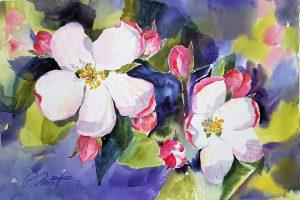 Zwei Apfelblüten voll aufgeblüht und viele Knospen ringsherum, eingebettet in grünes Blattwerk.