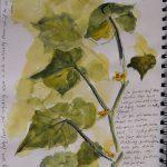 Gezeichnete Gurkenpflanze im Skizzenbuch mit notierten Gedanken.