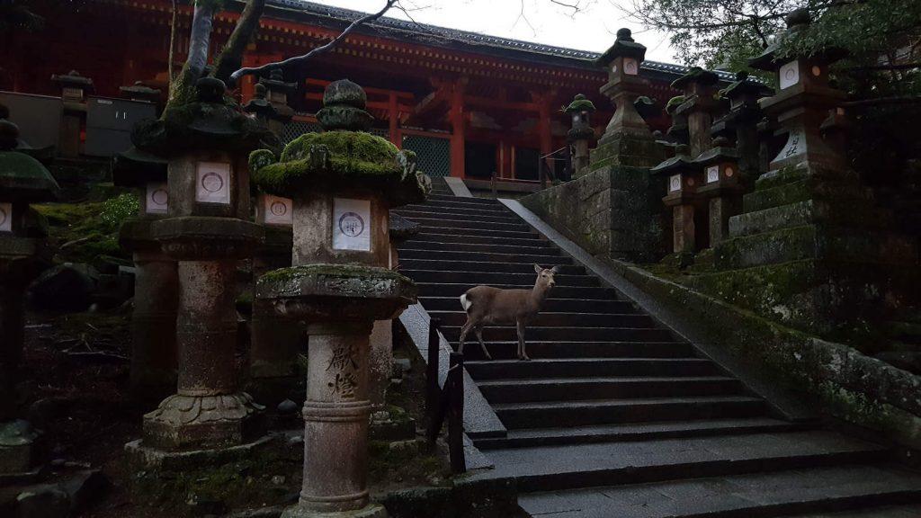 Das Foto stellt einen Hirsch in den heiligen Anlagen des Nara-Parks dar